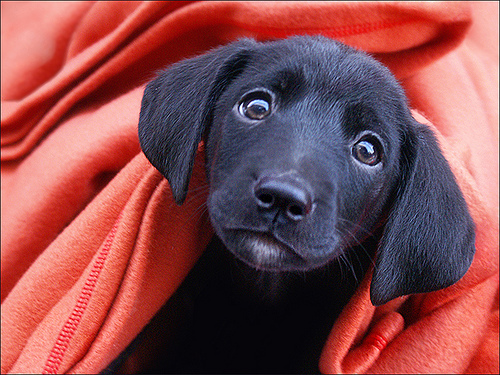I want to be the puppy that follows you home!