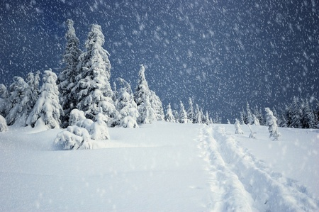 247 Falling Snow