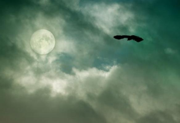 raven pic cropped