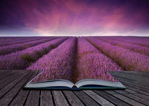 14929166 - imaginative image of lavender field landscape coming out of pages in book